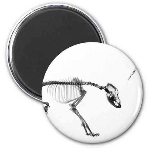 Mún esqueleto de la radiografía del perro en negro imán redondo 5 cm