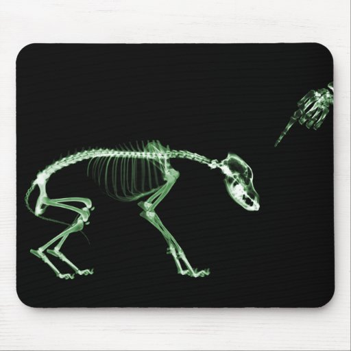 Mún esqueleto de la radiografía del perro en verde alfombrilla de raton