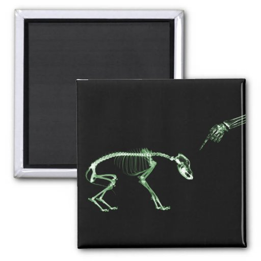 Mún esqueleto de la radiografía del perro en verde imán de nevera