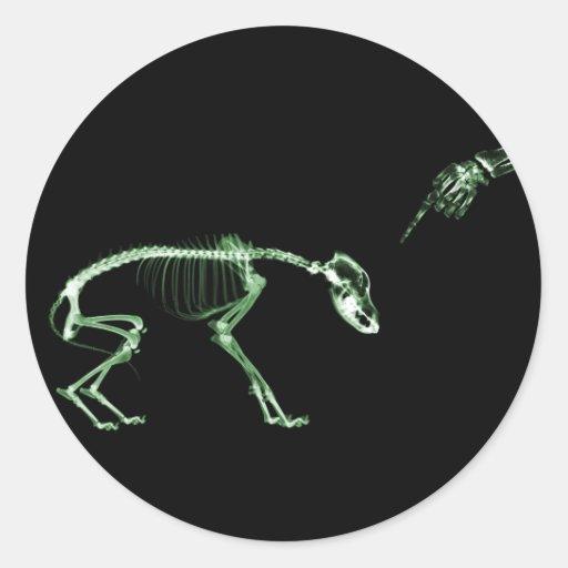 Mún esqueleto de la radiografía del perro en verde pegatina redonda