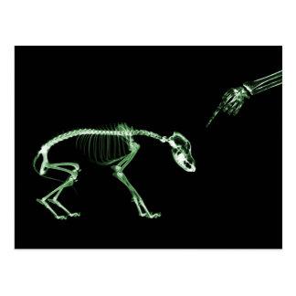 Mún esqueleto de la radiografía del perro en verde postal