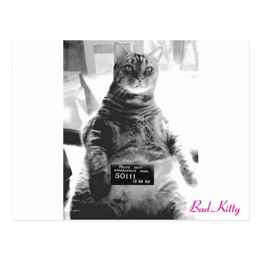 Mún gatito tarjeta postal