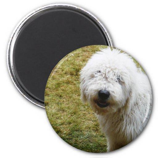 Mún perro muy rizado mullido del día del pelo imán redondo 5 cm