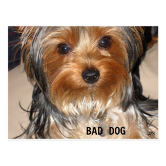 Mún perro postales