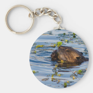 Munching Beaver collection Keychain