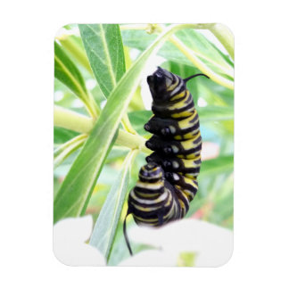 Munching Monarch Caterpillar Magnet