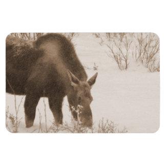 Munching Moose; No Text Rectangular Photo Magnet