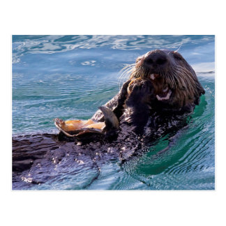 Munching Sea Otter Postcard