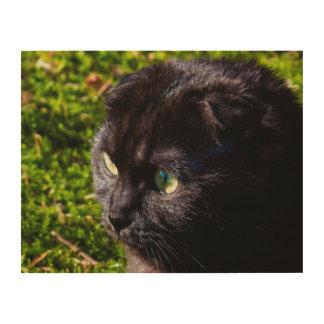 Munchkin Cat Close-Up Photography Wood Wall Art