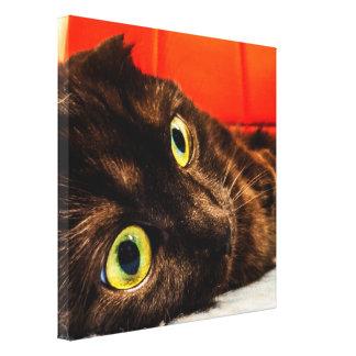 Munchkin Cat Cutest Face Ever Canvas Print
