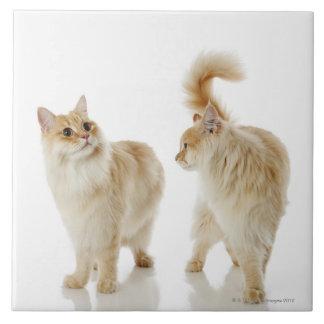 Munchkin cats ceramic tile