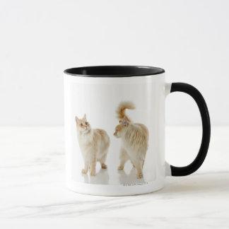 Munchkin cats mug
