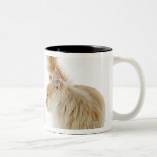 Munchkin cats Two-Tone coffee mug