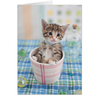 Munchkin Kitten With Pretty Ribbon Card