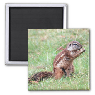 Munchkins 2 Inch Square Magnet