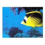 Mundo acuático, en el Mar Rojo Tarjetas Postales