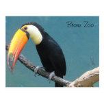 Mundo de pájaros tarjetas postales