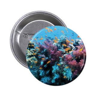 Mundo subacuático colorido hermoso pins