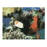 Mundo subacuático, en el Mar Rojo Postal