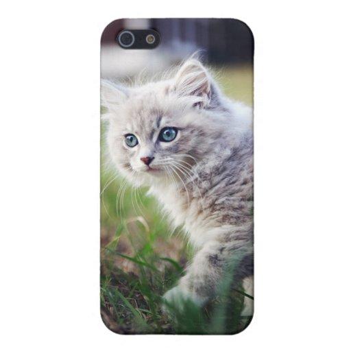 muñeca del gatito iPhone 5 fundas