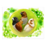 Munia Finches Realistic Painting Postcard