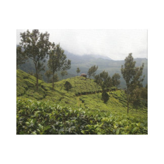 Munnar Tea Plantations of India Canvas Print