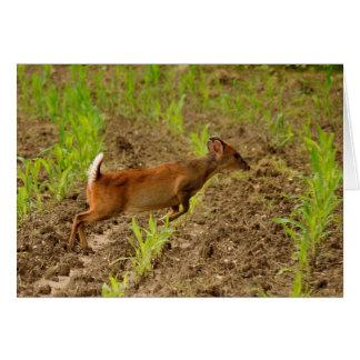 Muntjac deer blank greeting card