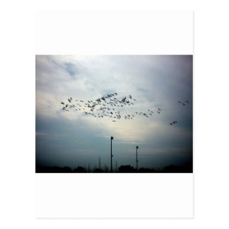 Murder of Crows Postcard