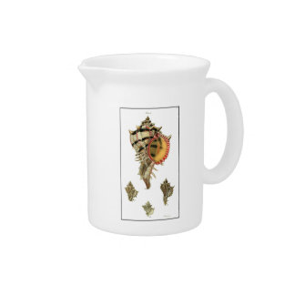 Murex sea shells vintage illustration beverage pitcher