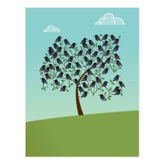 Murmuration of Starlings Postcard