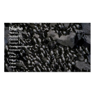 Murre Colony Business Card