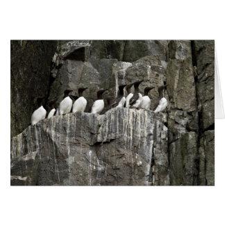 Murres común Castle Rock islas de Shumagin Felicitacion