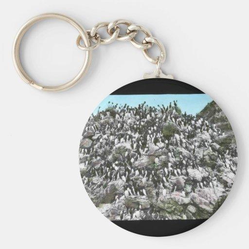 Murres común llavero redondo tipo pin