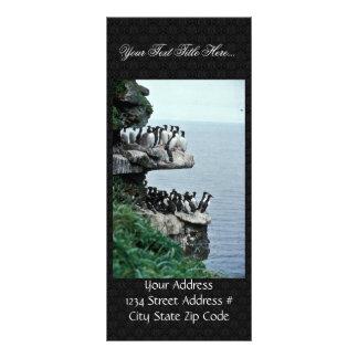 Murres on Sea Cliffs, Priibilof Islands Rack Cards