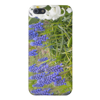 Muscari and Hyacinth iPhone SE/5/5s Cover