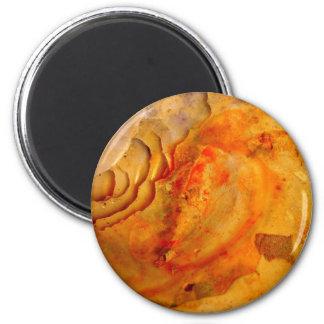 Muschel Magnet