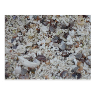 Muscheln von Strand Tarjetas Postales