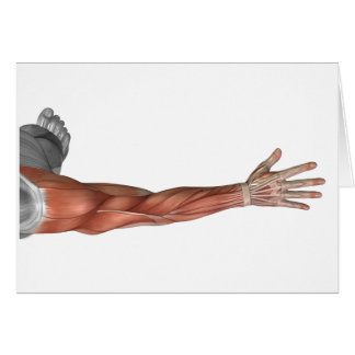Muscle Anatomy Of The Human Arm, Posterior View Card