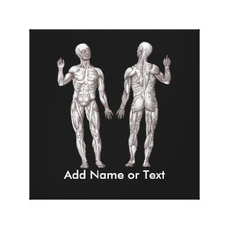 Muscle Men - Anatomy of the Human Muscular System Canvas Print