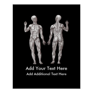 Muscle Men - Anatomy of the Human Muscular System Poster