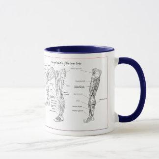 Muscle of the lower limbs mug