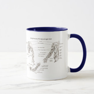 Muscle of the upper and lower limbs mug