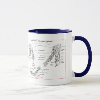 Muscle of the upper limbs mug