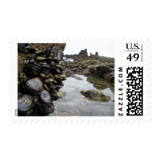 Muscles and Rocks on Newport Beach Stamps