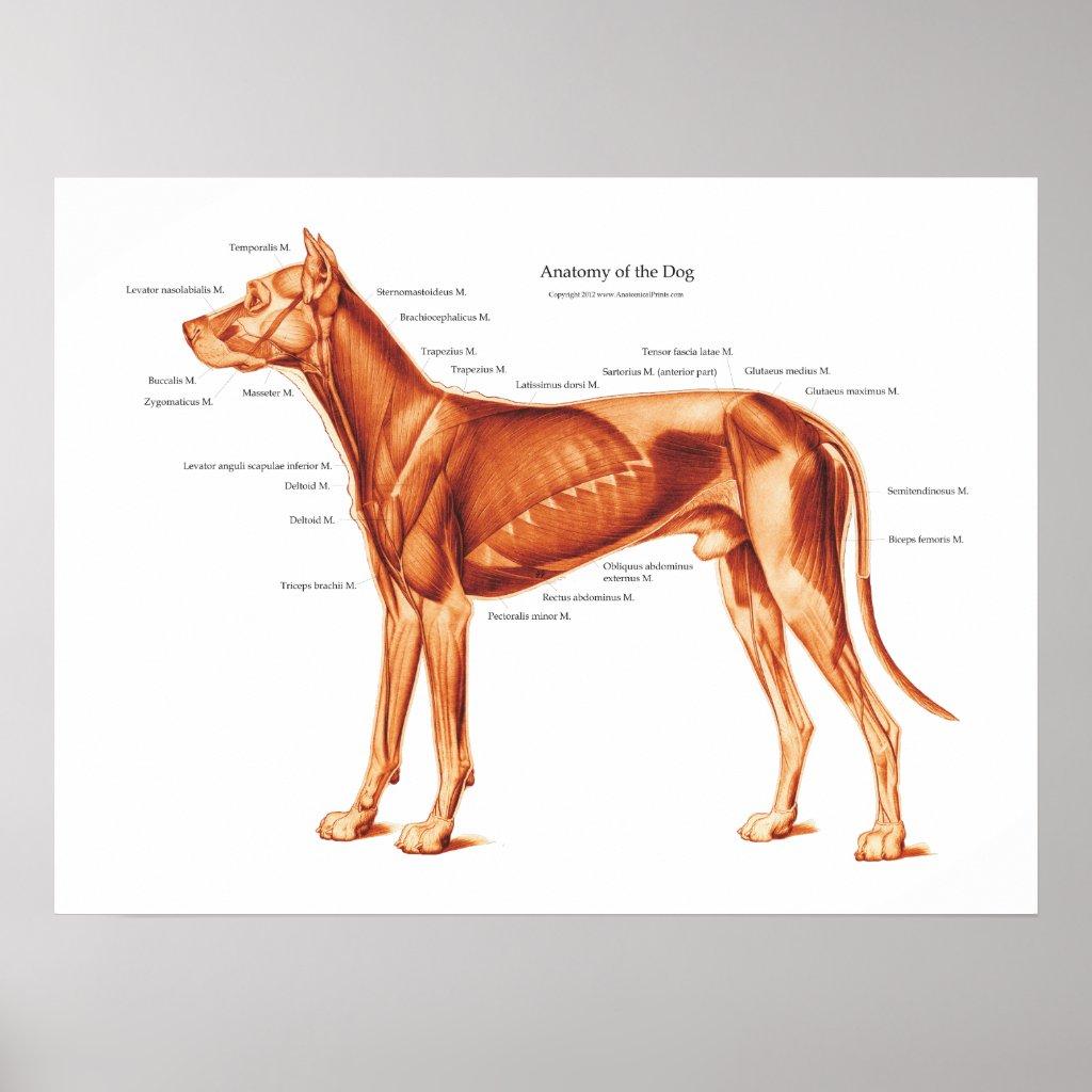 Animal Anatomy Posters