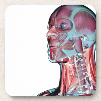 Muscles of the Head and Neck Beverage Coaster