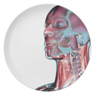 Muscles of the Head and Neck Dinner Plate