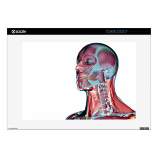 Muscles of the Head and Neck Laptop Skin