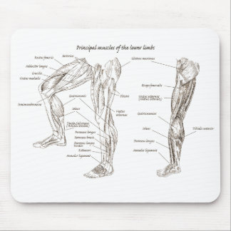 Muscles of the lower body mouse pad