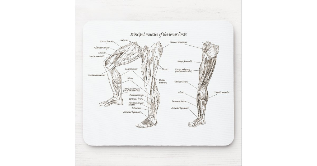 Muscles Of The Lower Body Mouse Pad Zazzle